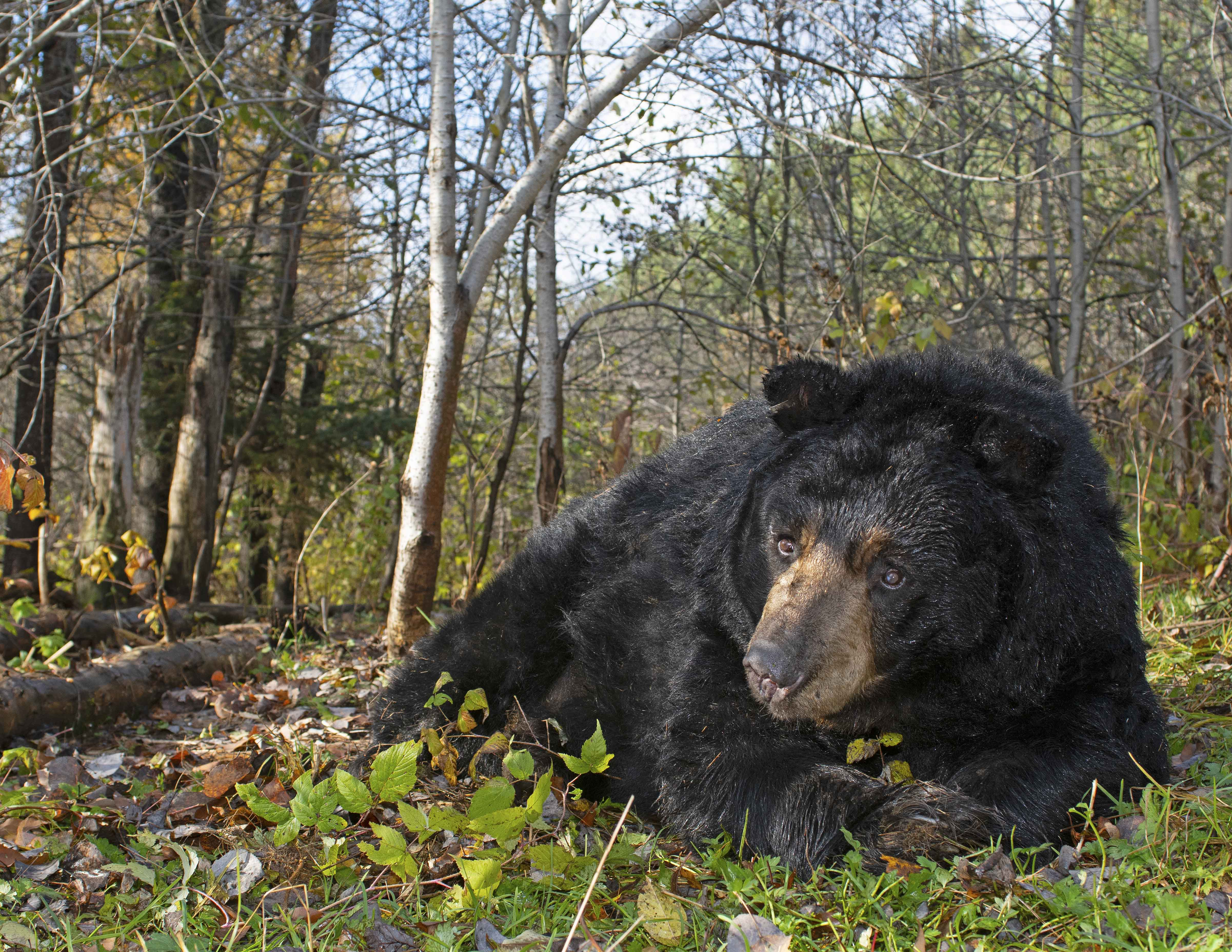Yogi Bear, 10,2019
