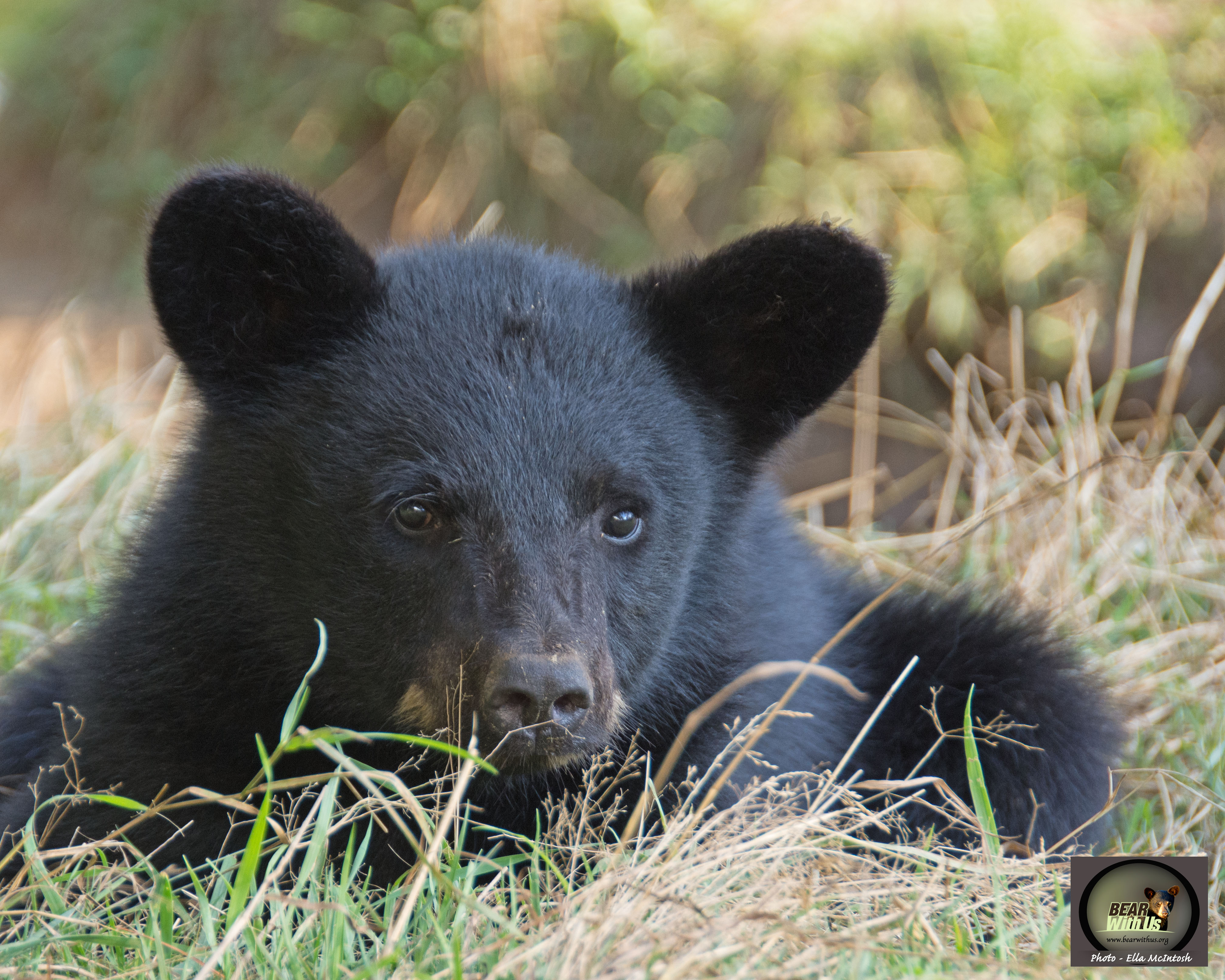 cub,Matt,Ella,Aug.21,2019,D72_6118