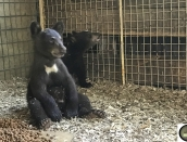 cub,Blinkey,June22,2019,IMG_7982 copy