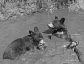cubs,10,B&W,July2019,Ella,IMG_7998