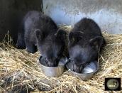 cubs,Fluffy, Link,June14, 2019,IMG_0949