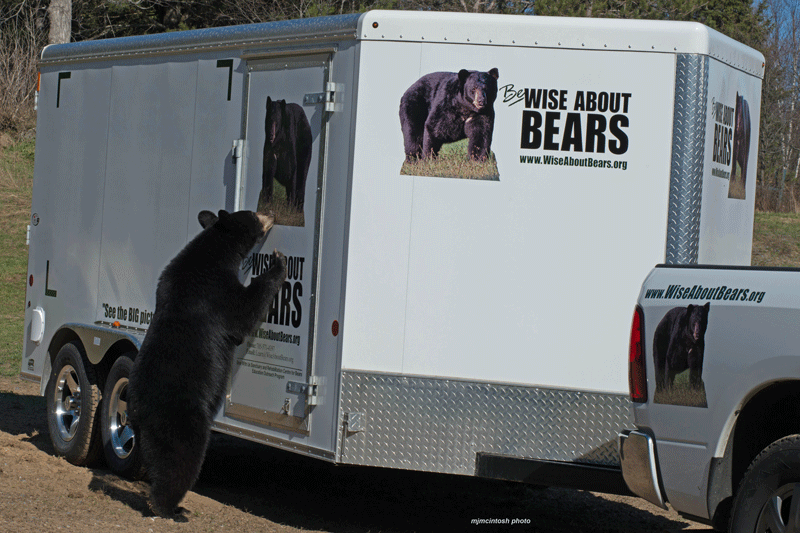 bear-inspection,b,web,May-6-2014,D804494