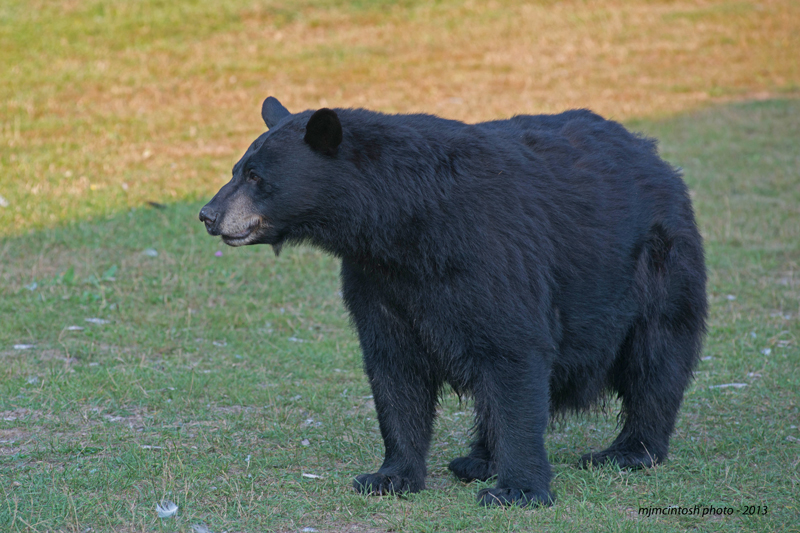 bearold-momma-aug-212013d80_7112