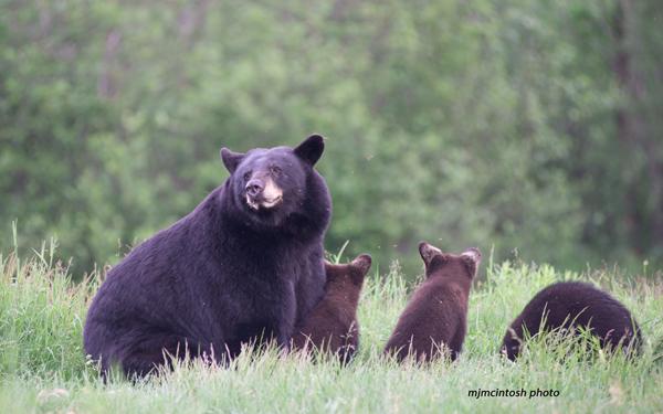 bears-june-112iso800d80
