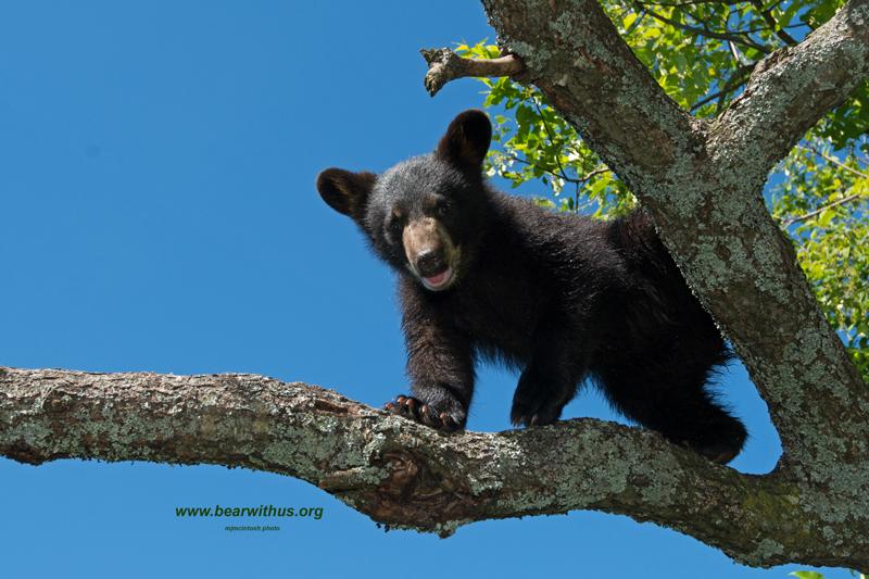 cub,web,Velvet,txt-bearwithus