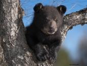 Cubs-Corner---For-Kids