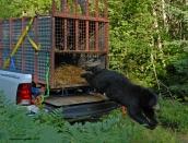 bear-releasec-july-29-2013d200dsc_0441