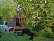 bear-releasejuly-29-2013d200dsc_0451