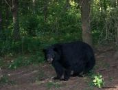 bearmommajuly-13-2013d80_5813