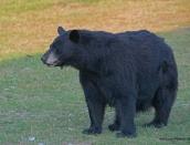 bearold-momma-aug-212013d80_7112