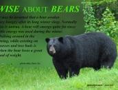 wiseaboutbears-fact,a,web,bear,fat,June-1-2013,D200,DSC_0073