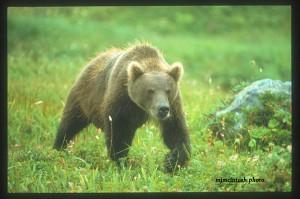 Russia-bear-a--mjm1998