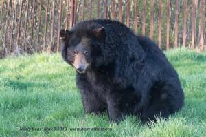 Molly-Bear,b,May-9-2013,web,D80_3688