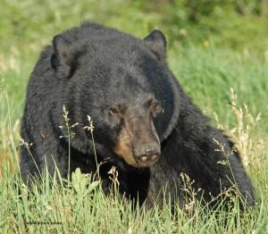 bears-June-2-2010-D200-029