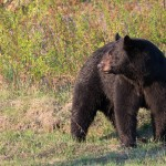 bear,black face,20150507,D807092