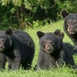 cubs,mom,_D802462