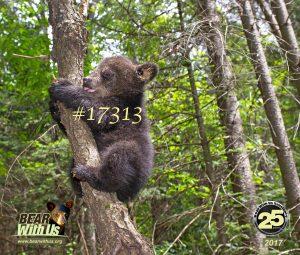 17313,mousepad,cub,D800, bears,cubs 072 copy