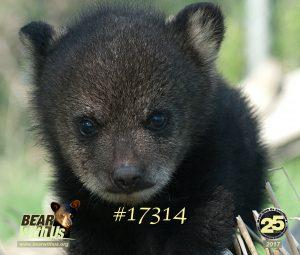17314,mousepad,cub,a,D200,105micro, new cub,sudbury 013 copy