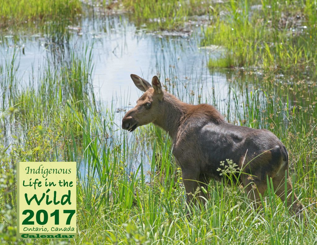 Wildlife Calendar Cover,808494